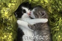 "Coup de coeur : ""La tendresse """