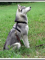 Jaïka (8 mois)