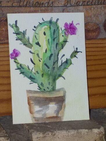 Jolis cactus.