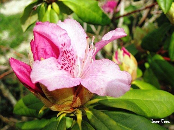 Fleurs-3142.JPG