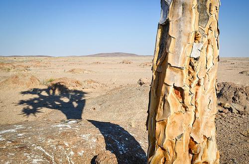 On cherche le nom d'un arbre vu à la télé.