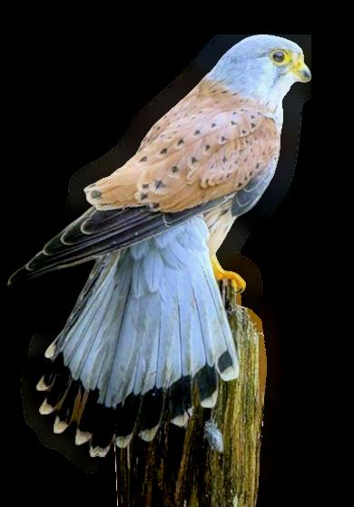 Tubes oiseaux création 20