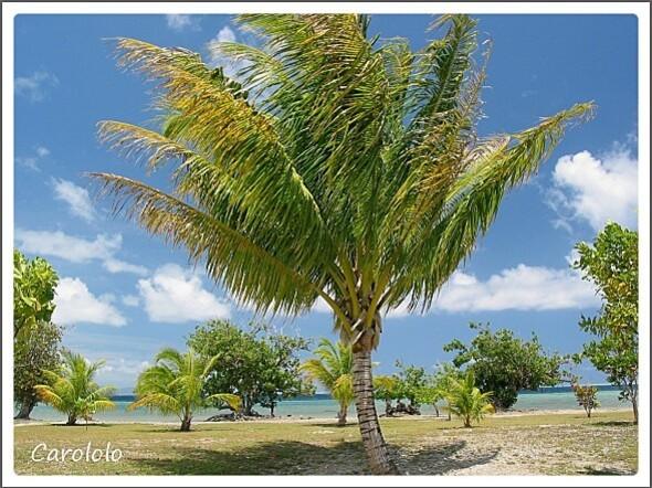 Tahiti (2)
