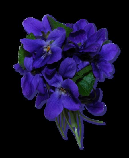 Tubes bouquets Violettes
