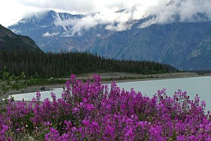 LAKE-KLUANE