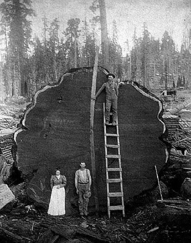Que faire avec un arbre ?