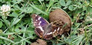 La nature et nous, les papillons,