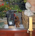 Eichhörnchen und Venus