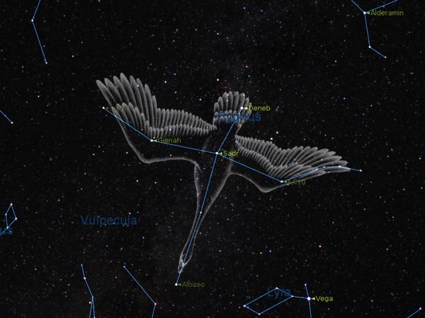 constellation cygne