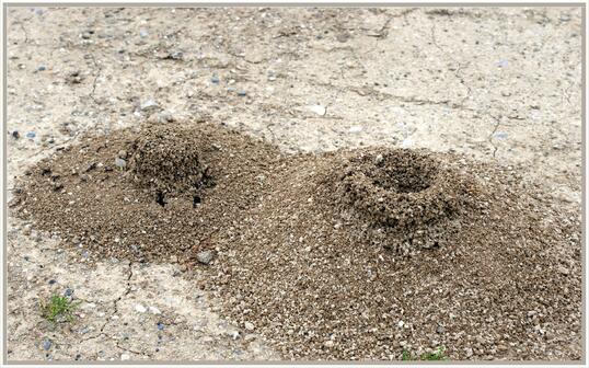 Construction de fourmis