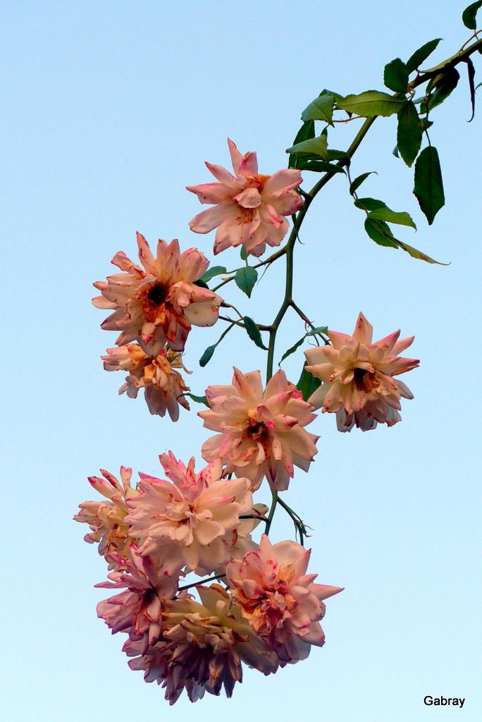 Les fleurs de mon jardin en septembre! - gabray 31 en Tolosan
