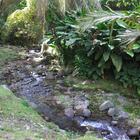 Une des rivières qui parcourt le domaine (Rivière Roche ?)