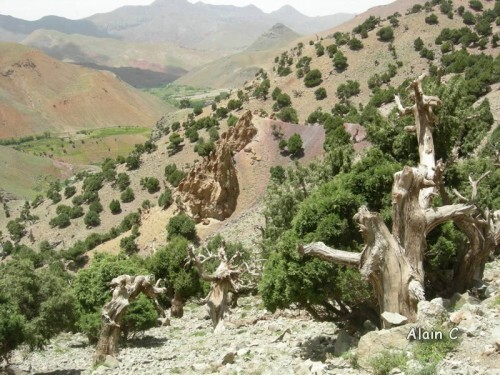 Foret du Haut atlas Maroc 2011 048