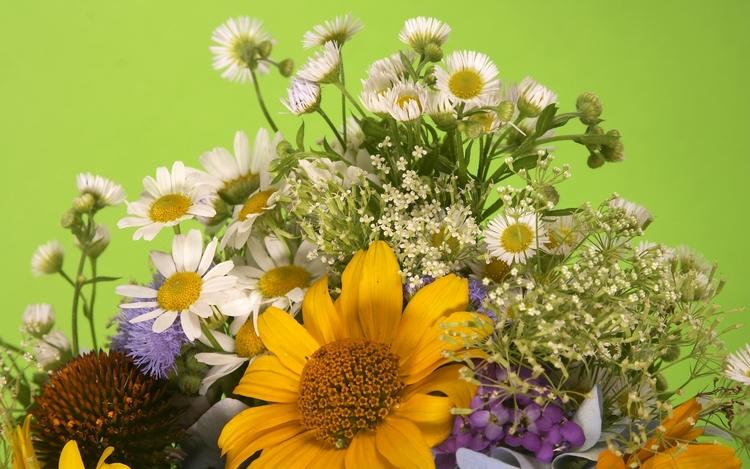 25 Images de fleurs