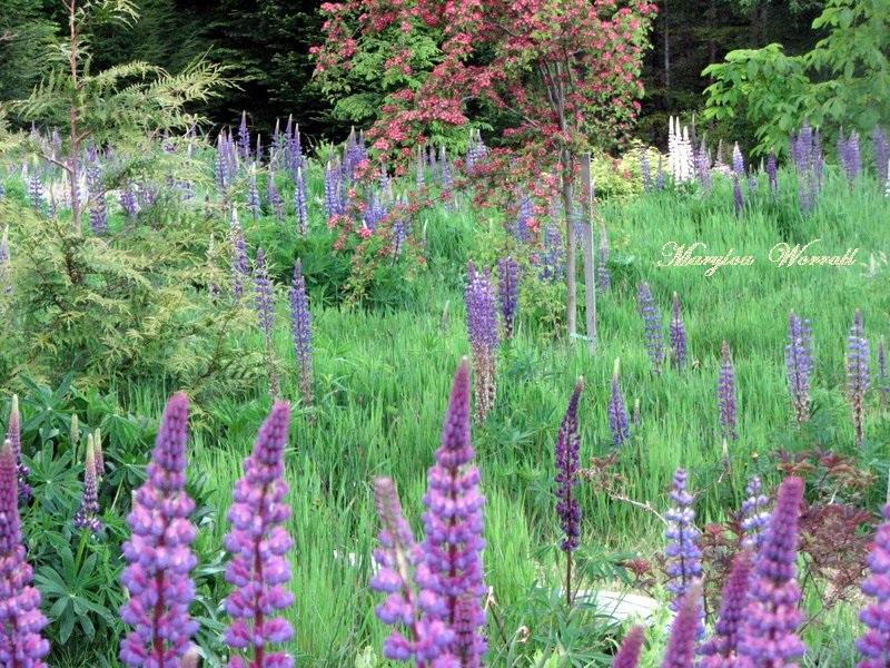 Nouvelles du Canada 92 : Le bonheur est au jardin