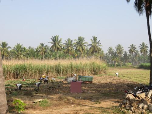 Environs de Mysore