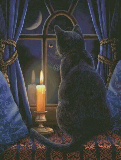 Tableau du samedi : Chat noir en reflet