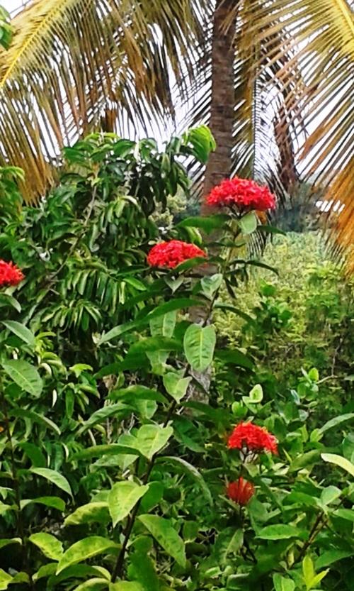Village d'antan Martinique 5