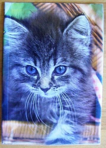 Beakimcat-sept-2012--1.jpg