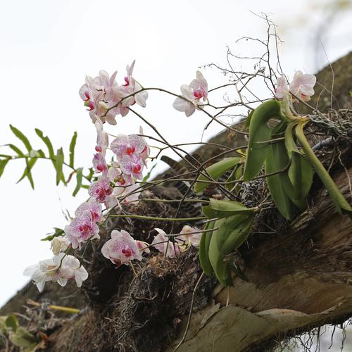 Flore de Guadeloupe et d'ailleurs au Jardin Botanique