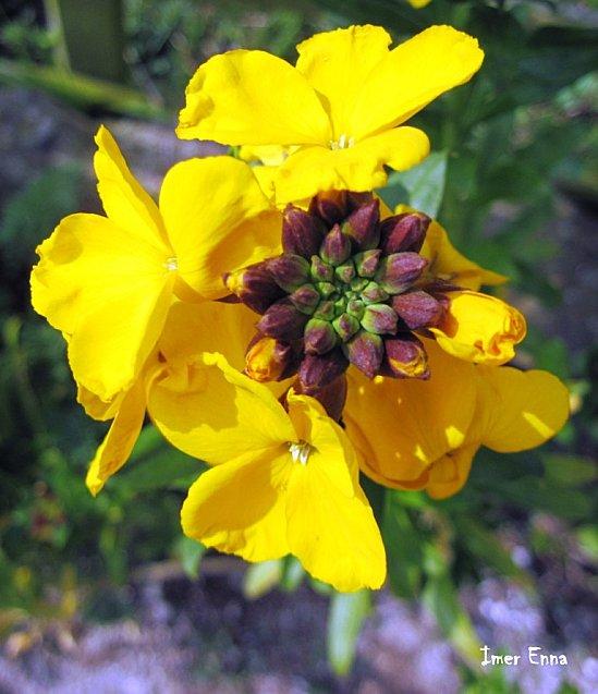 Fleurs-3144.JPG