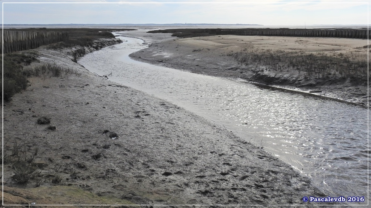 En longeant la plage entre Lanton et Cassy - fin Mars 2016 - 8/8