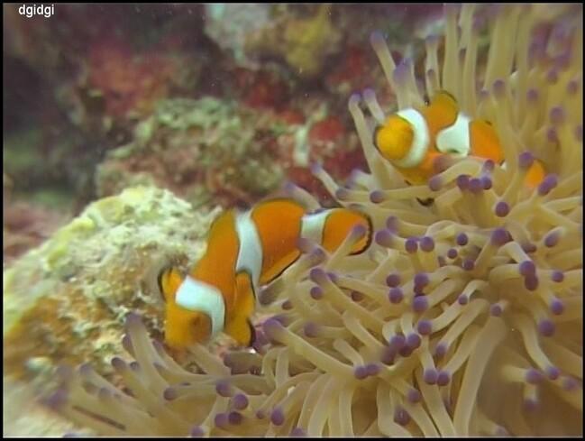 Plongee-Mickaelmas-Cay-0--106--border.jpg