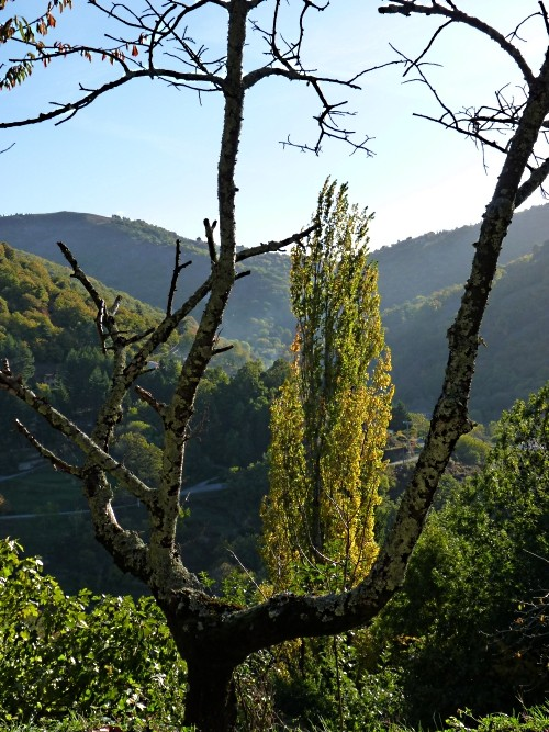 Fête Ardèche Antraigues 6 mp1357 2011