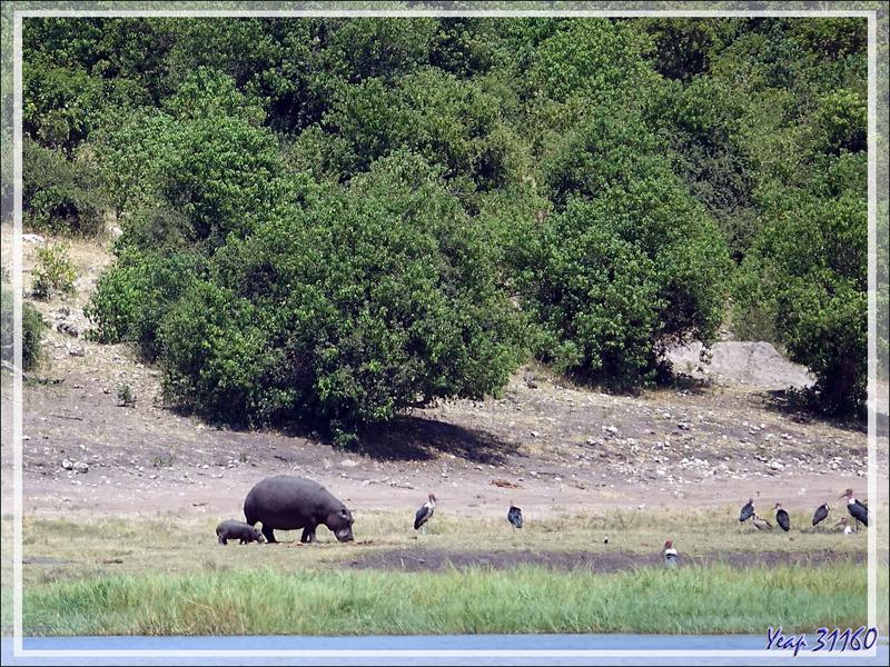 Le bateau est sur le retour après cette superbe matinée, Hippopotames, Marabouts, Buffles, Impalas, s'estompent au loin ... - Safari nautique - Parc National de Chobe - Botswana