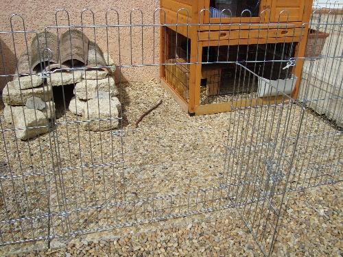 exemple d'habitat pour les lapins nains
