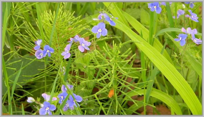 Fleurs des champs .....