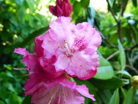 floraisons de ce début de juin 2013