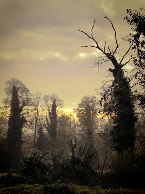 Le rèveille des arbres