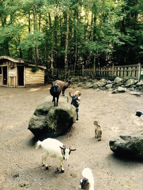 La maison des loups