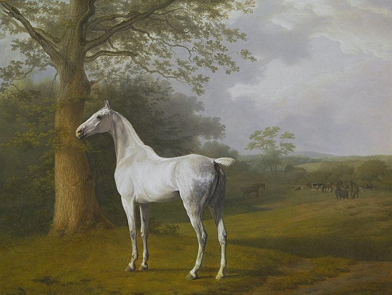 Cheval blanc dans une pâture