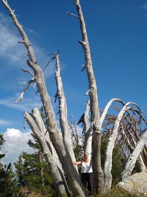 1 et 2 septembre Yosémite parc