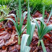 Thumbnail feuilles mortes   paillis 1