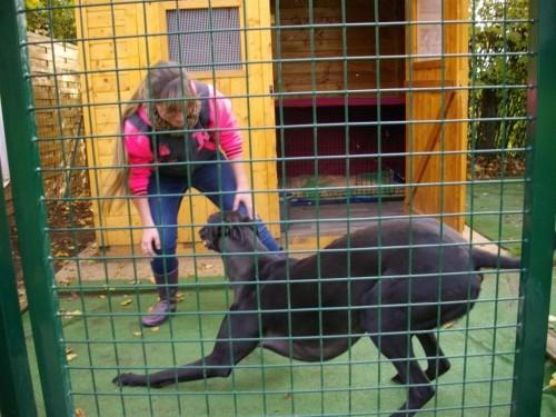 """"""" Le Jardin des lévriers """" Havre de paix et maison d'accueil des greyhounds rescapés"""
