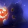 Icon chat et autres~