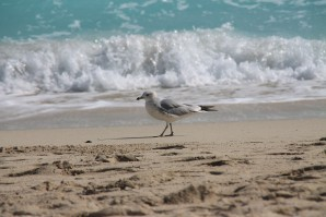 Miami-beach 2451