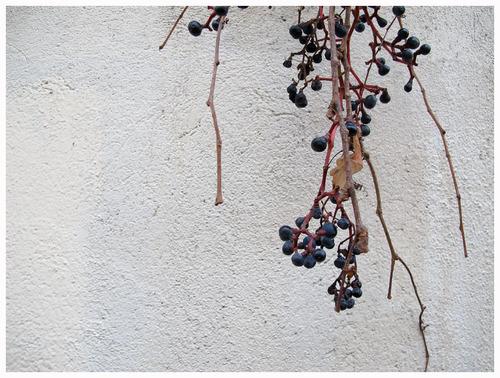 Les Raisins de la Colère.