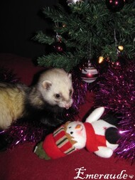 Photo-Furet-Bartok-11.12.24-03