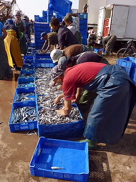 Agadir sardines