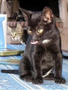 chatons-TIGROO-et-LINDA.jpg