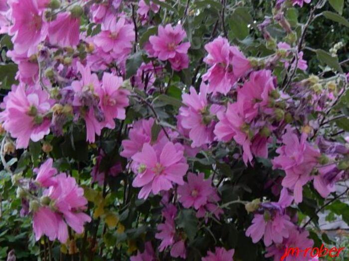 Deuxième jour de canicule en Limousin; ouf! La pluie et petit vent frais....