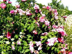 Rilhac Lastour 87: Le rendez-vous des jardins «le jardin de l'An mil à nos jours» une belle inspiration médièvale (1/2)