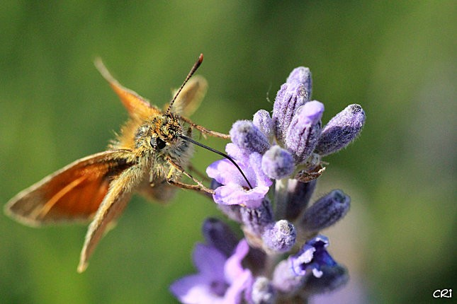 macros-insectes 2962