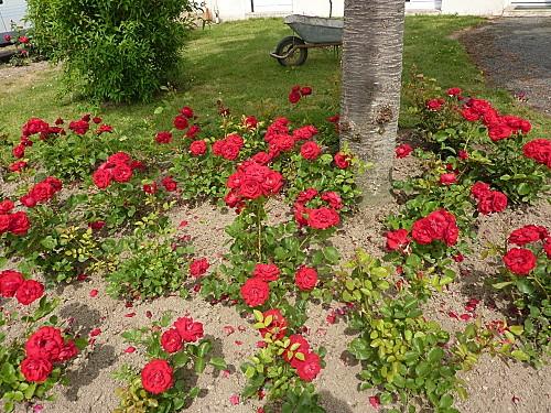 fleurs-et-escargot-006.jpg