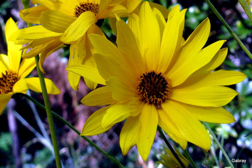 Fleurs du jardin en septembre - gabray 31 en Tolosan