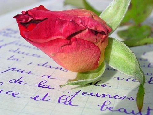 roses-morez-france-2646295429-900247